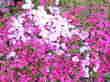 CA3G0451.jpg